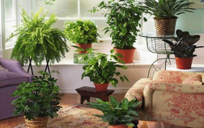 Підживлення кімнатних рослин - 9 корисних порад