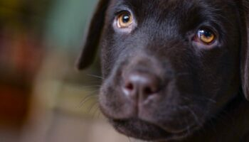 Хлопчик приніс собаку в притулок з листом: його зміст поширили в Мережі