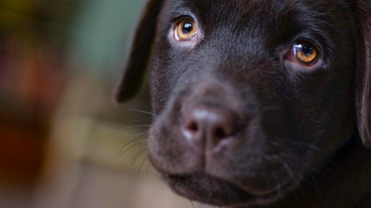 Хлопчик приніс собаку в притулок - історія життя