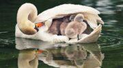 Мама – і цим все сказано. Милі і зворушливі фотографії мам тварин з малюками