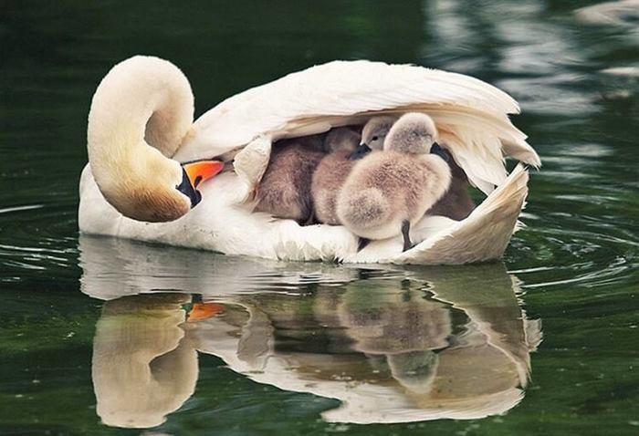 Мами твар і їх діти - фото добірка