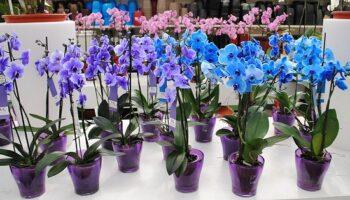 Як правильно виростити з живців орхідею