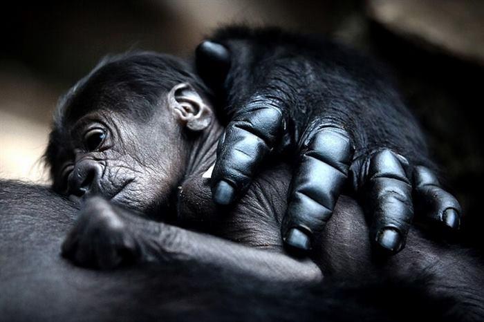 Мама - і цим все сказано. Милі і зворушливі фотографії мам тварин з малюками