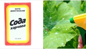 Сода - три методи застосування на городі