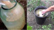 Дріжджі – натуральне і ефективне добриво для гарного врожаю