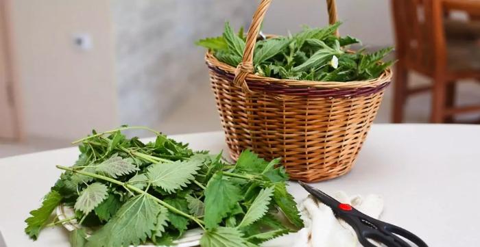 Бабусин рецепт універсального добрива для городу зі свіжої кропиви