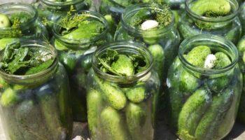 Мариновані огірки на зиму: 5 рецептів