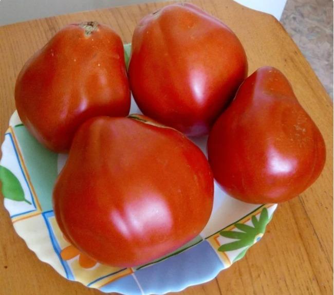 Якщо помідори вже зацвіли, підживіть їх цієї підгодівлею, щоб виросли великі і цукристі плоди