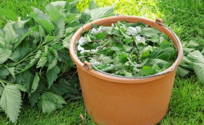 Сусідка все літо відрами збирає урожай огірків: розповіла, чим підживлює огірки