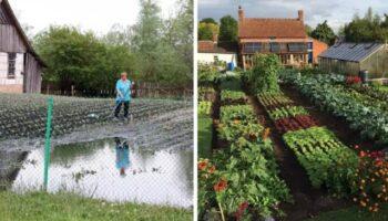 Дощі знищили мій город, але ще є шанс отримати великий урожай, посадивши ці овочі, пізнього дозрівання