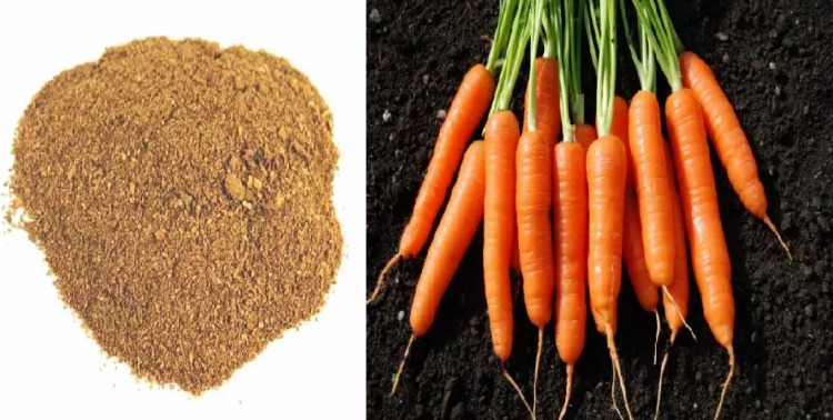 Як збільшити урожай моркви - корисні поради