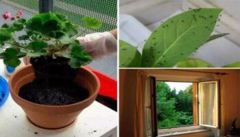 Поради від господинь: звідки з'являються комашки в будинку і як позбутися від докучливих комах в кімнатних квітах