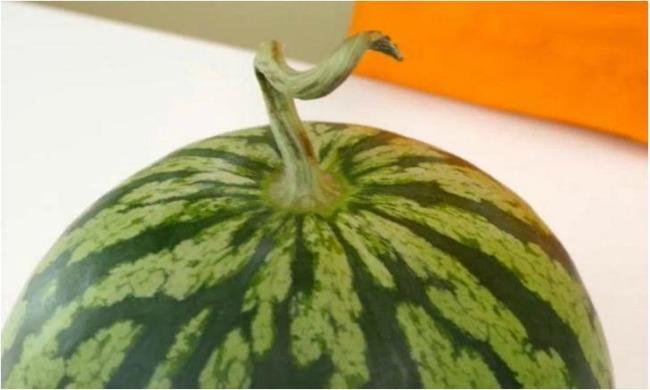 Щоб вибрати смачний кавун, не потрібно по ньому стукати: 4 підказки від фермера