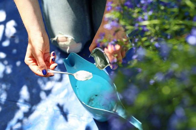 Працівниця теплиці розсекретила, чим полити слабкі орхідеї для зросту і довгого цвітіння