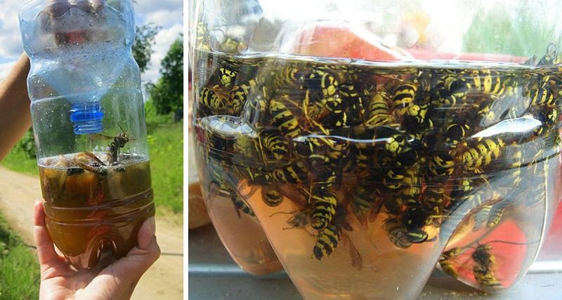 Проста і ефективна пастка для комарів за 5 хвилин
