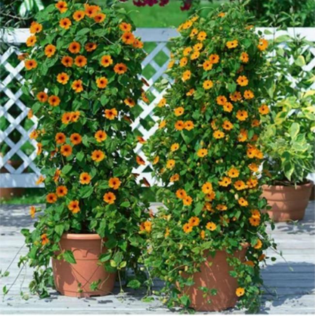 У всіх сусідів ростуть петунії, але ж є 3 квітки, які набагато кращі за петунії