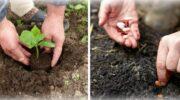 Які овочі можна висадити в липні на городі? Щоб встигнути зібрати урожай