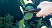Будь-яке дерево можна змусити плодоносити, головне – знати просту і робочу техніку