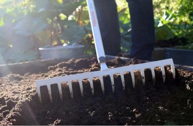 На яку грядку не варто садити озимий часник, якщо не хочете отримати поганий урожай