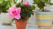 Які аптечні засоби змусять цвісти домашні рослини