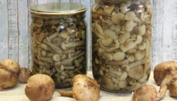Бабусин рецепт маринованих опеньків