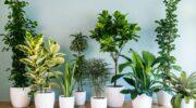 Ось для чого кімнатним рослинам так необхідний перекис водню