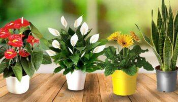 Що зробити щоб кімнатні рослини росли швидше: топ-5 порад від досвідчених флористів