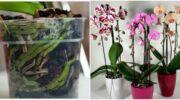 Прості секрети, завдяки яким орхідея цвіте круглий рік