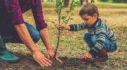 Кращі дерева, які можна висадити біля хати для забезпечення гарного самопочуття та родинного добробуту