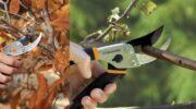 Осіння обрізка яблунь та вишень – обов'язкові процедури. Як правильно доглядати за садом восени?