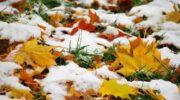 Погодні прикмети на Покрови: якою буде зима?