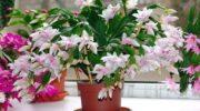 Просте підживлення, яке люблять всі кімнатні рослини
