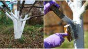 Чому восени потрібно білити дерева. Як зробити це правильно
