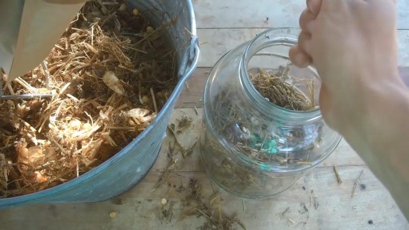 Грибів буде багато! Простий метод виростити гливу вдома