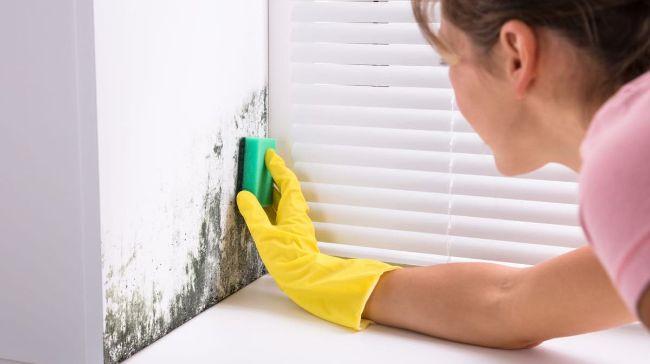 Як позбутися від цвілі в будинку за допомогою доступних засобів: прості рекомендації