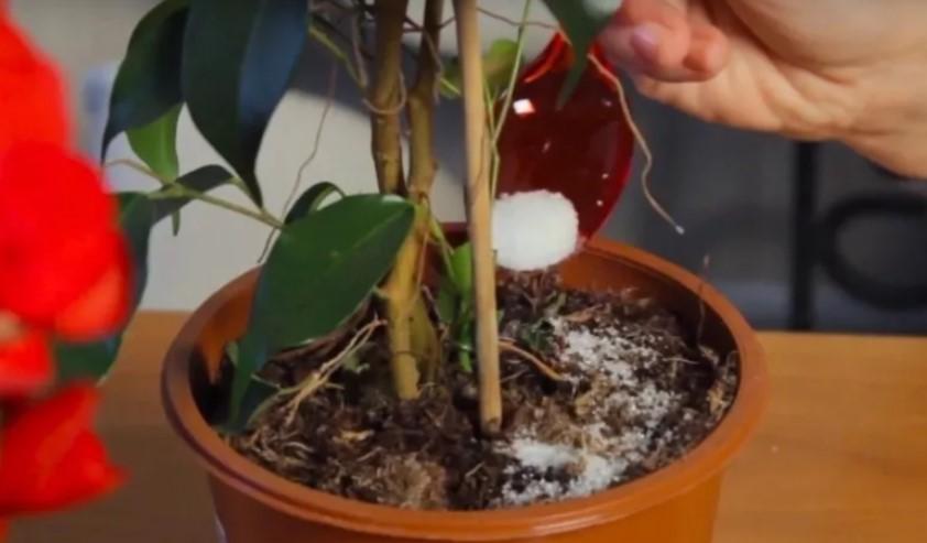 Чим підживлювати кімнатні рослини. Доступні, натуральні добрива, які є під рукою