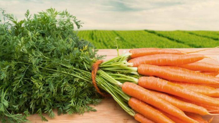 Витрачені 5 хвилин в січні подарують вам 100% сходження моркви в травні