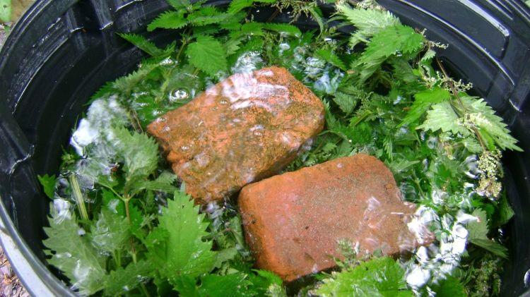 Прості підживлення для багатого врожаю ягід полуниці