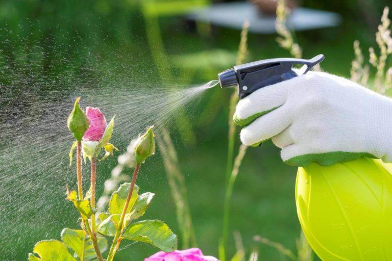 Як захистити свою ділянку від павутинових кліщів і тлі. Три ефективних розчини, які допоможуть врятувати урожай