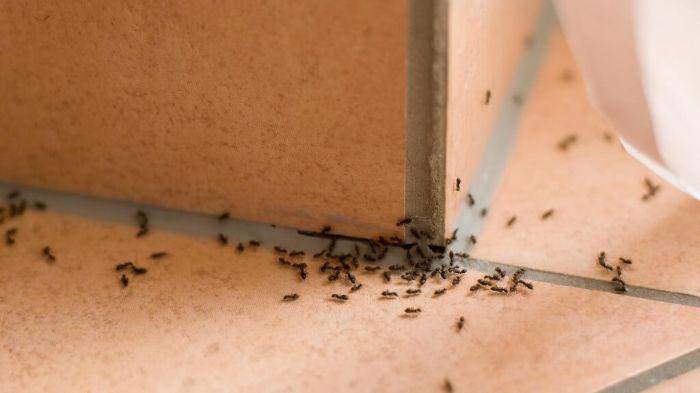 Позбавляємося від мурах в будинку: найефективніші народні методи боротьби