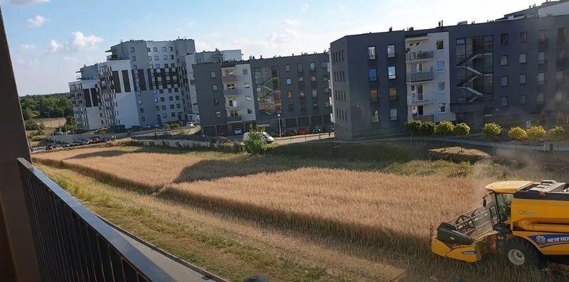 Сміливий фермер збирає врожай в оточенні будинків, відмовившись продавати землю жадібним забудовникам