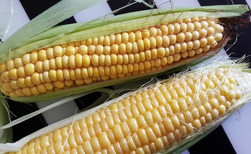 Як правильно вибрати смачну і солодку кукурудзу