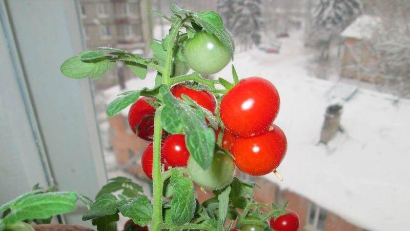 Городні рослини, які можна забрати додому на зиму
