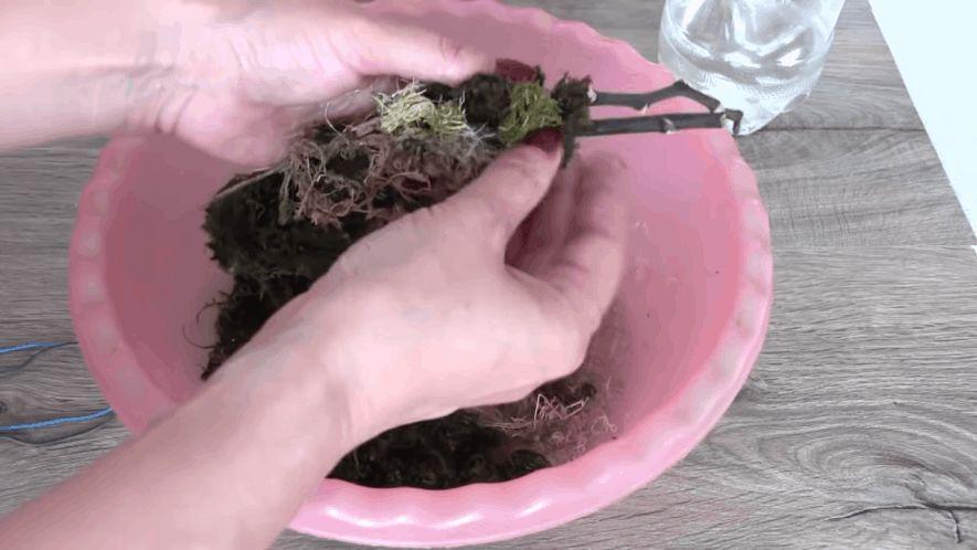 Відмінний спосіб розмноження орхідей, який не вимагає використання цитокінінової пасти