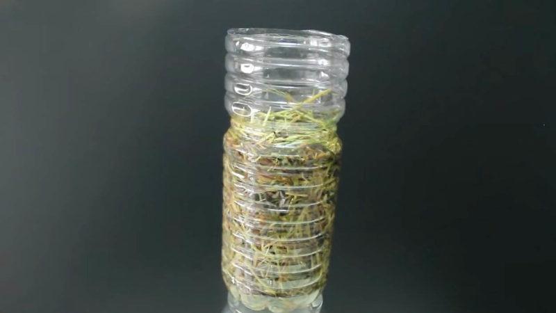 Пляшка + солома + будь-який гриб: найпростіший і ефективний спосіб вирощування грибів